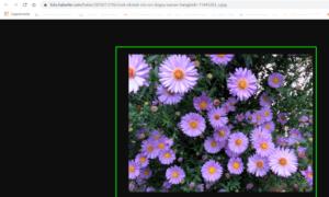 İnternetten Resim Nasıl İndirilir?